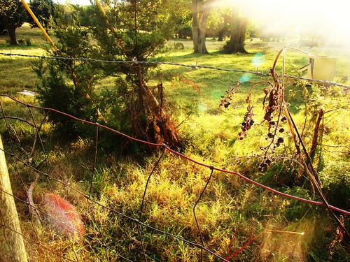 File:Sunny day.field.jpg