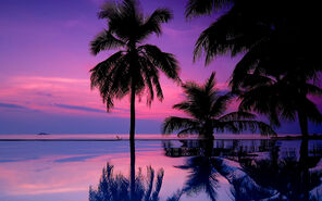 7021833-tropical-purple-sunset