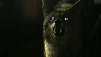 Malia-coyote-form-Teen-Wolf-Season-6-Episode-3-Sundowning