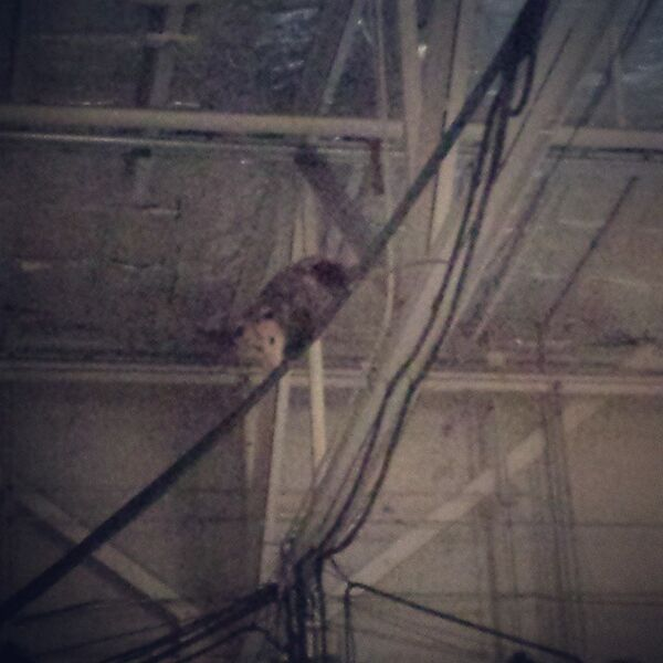 Teen Wolf Season 5 Behind the Scenes Rogue Possum in the rafters 022315