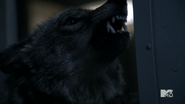 Teen Wolf Season 3 Episode 14 Werecoyote growl
