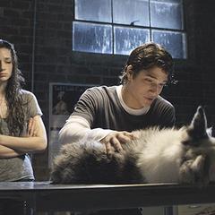 Scott behandelt den Hund, der Ausversehen von Allison angefahren wurde