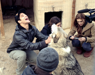 Posey and Holland Real Wolf