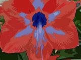 Blue Veined Amaryllis (HFTC)