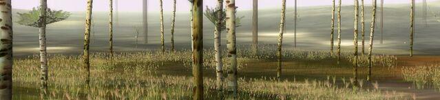 File:Birchforest.jpg