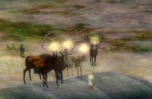 Deer tef