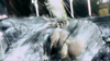 Le maître de Feng/Galerie d'images