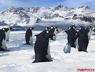 Polar Paradise