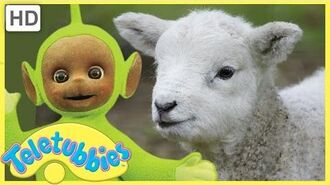 Teletubbies Full Episode - Mary Had a Little Lamb Episode 257