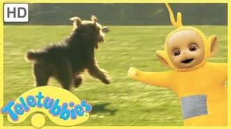 Teletubbies Full Episodes - Our Dog Alice (Season 7, Episode 157)