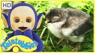 Teletubbies English Episodes - Chicks ★ Full Episode 228 US