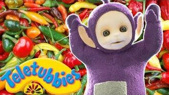 ★Teletubbies English Episodes★ Picking Chillies ★ Full Episode - HD (S14E27)