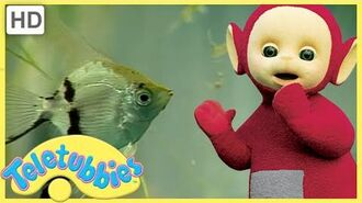 ★Teletubbies English Episodes★ Tropical Fish ★ Full Episode - HD (S08E203)