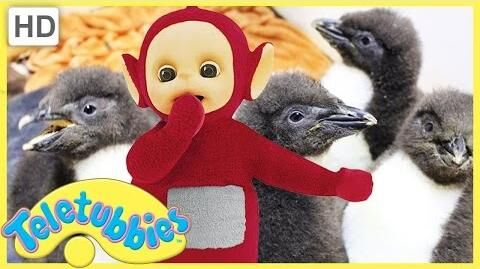 Teletubbies English Episodes - Feeding Baby Penguins ★ Full Episode 243