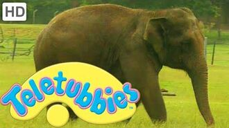Teletubbies- Washing the Elephant - HD Video