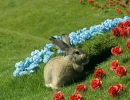 Teletubbies Rabbit