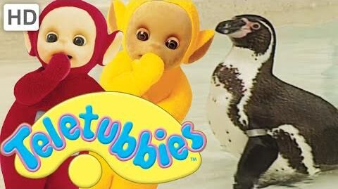 Teletubbies- Penguins - Full Episode