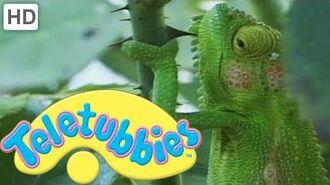 Teletubbies- Chameleons - HD Video