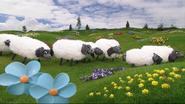 Sheep explore Teletubbyland