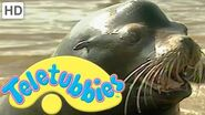 Teletubbies- Sea Lions - HD Video