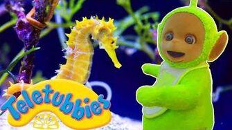 ★Teletubbies English Episodes★ Seahorses ★ Full Episode - HD (S11E272)-1
