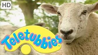 Teletubbies Herding Sheep - HD Video