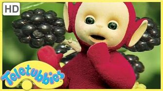 ★ Teletubbies English Episodes ★ Blackberry Picking ★ Full Episode - HD (S08 E194)