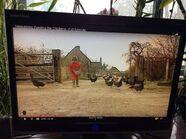 Matthew feeding the chickens