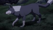 Ranga Direwolf Anime 1