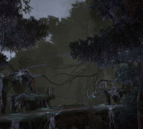 PN80 Zeitlose Wälder