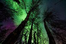 Aurora-borealis-dark-low-angle-photography-902756
