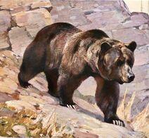 Animal - Bear - Grizzly bear 2-1024x655