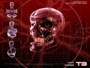 Terminator-skull of the t-850