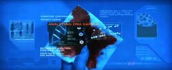 T-X DNA