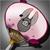 Pig's Fan icon