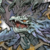 Leviathan Λ icon
