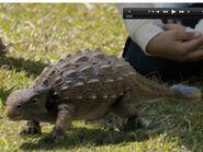 Hatchling Ankylosaurus