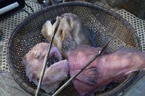 Terra Nova fish2