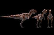 Subadult Carnotaurus