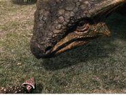 Ankylosaur adult and juvenile