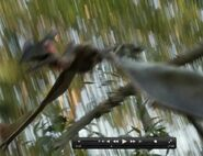 Pterosaur in tree