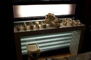 Laboratory skulls