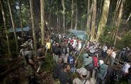 TN set jungle
