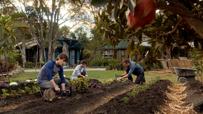 Shannons Gardening 1