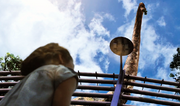 Zoe discovers Brachiosaurus