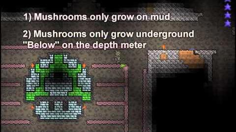 Terraria Farm - Glow Mushrooms with style (pixel art)