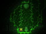 Esporas de la selva