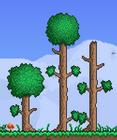 TreesD