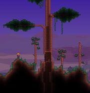 Living Wood2