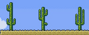 48 Cacti